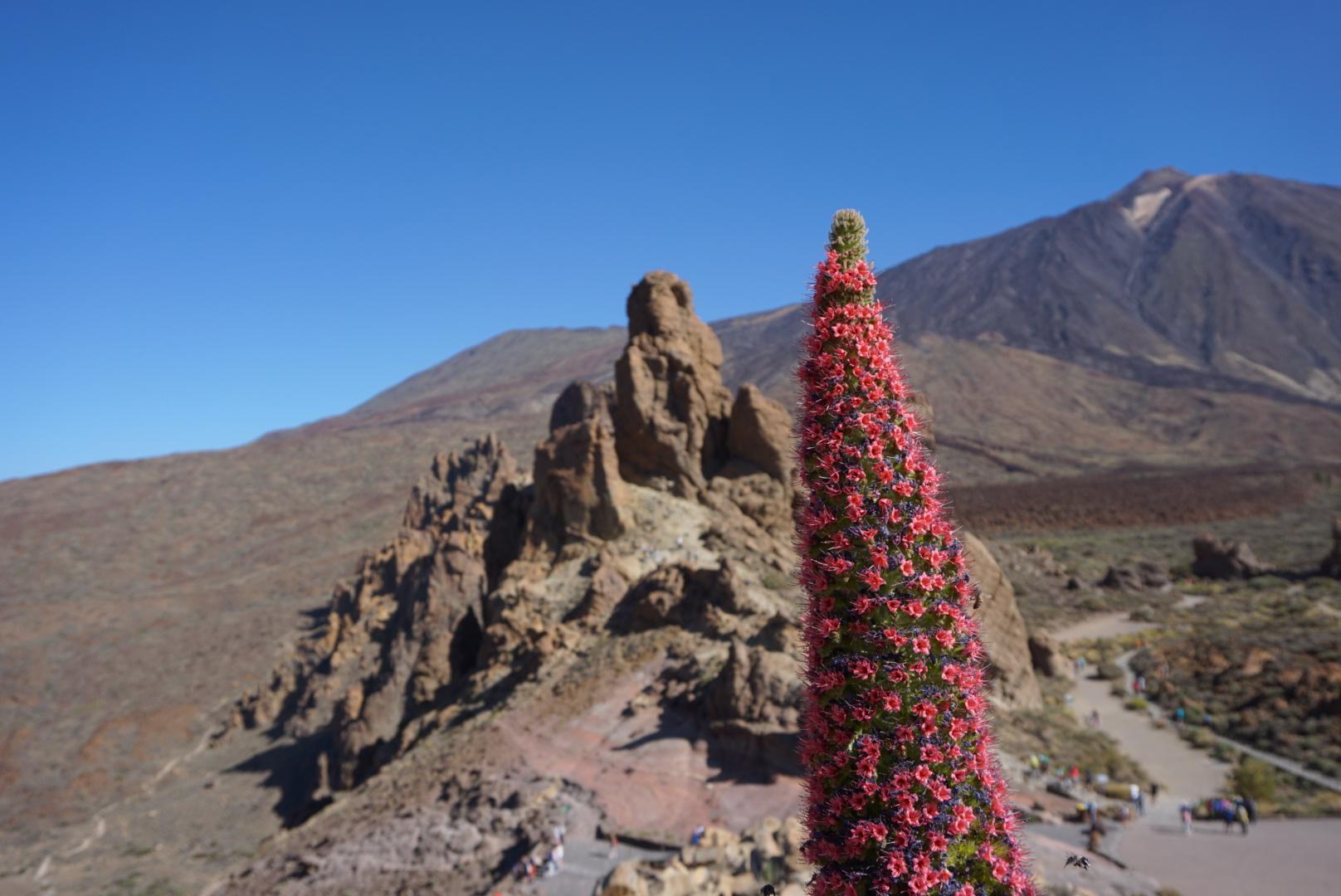 Mount Teide - Tenerife, Canary Islands